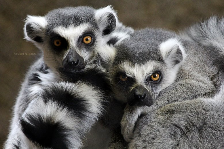 Peoria Zoo| Personal