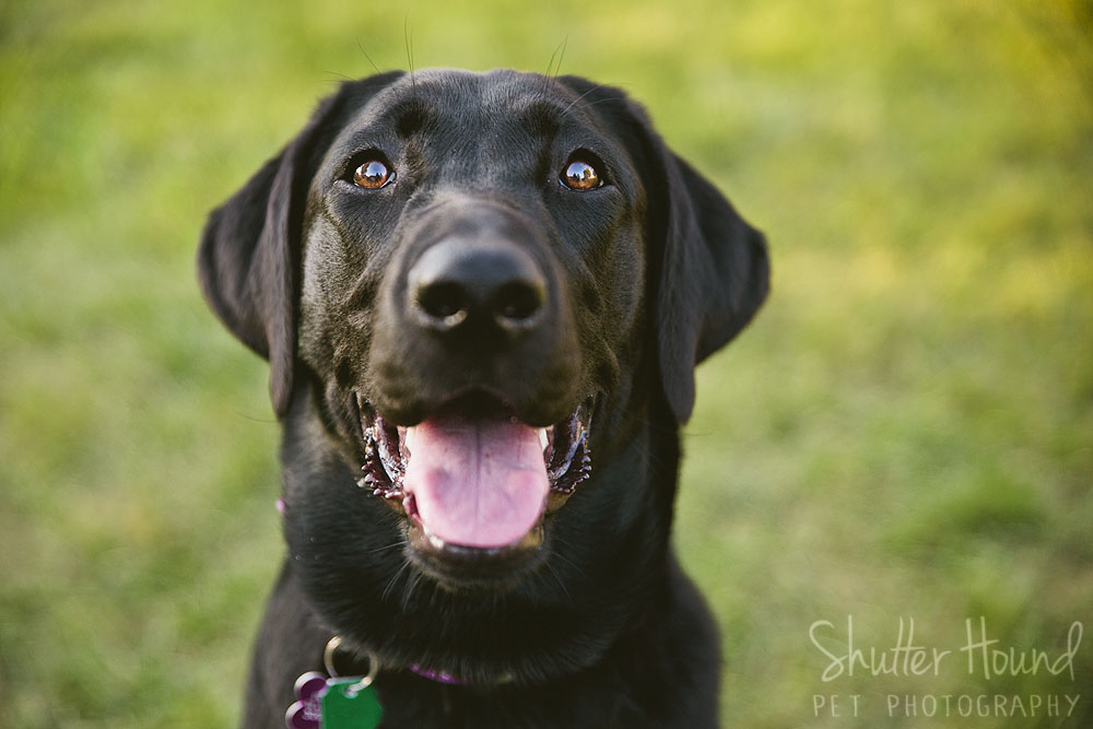 Gloria_ShutterHoundPet_Photography048
