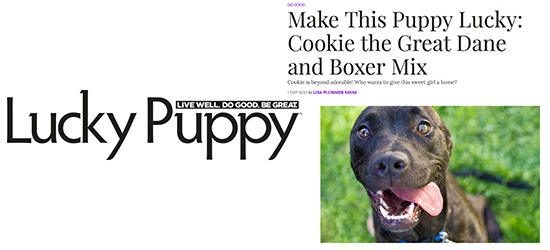 Cookie Was Featured On Lucky Puppy Magazines Website Shutter