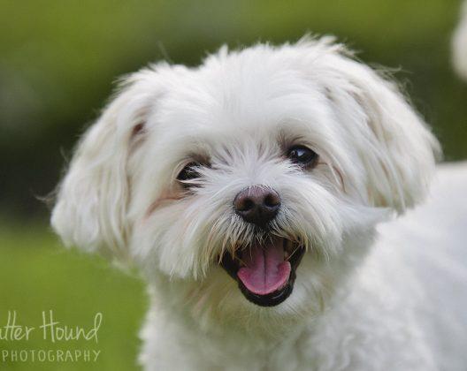 Shutter Hound Pet Photography