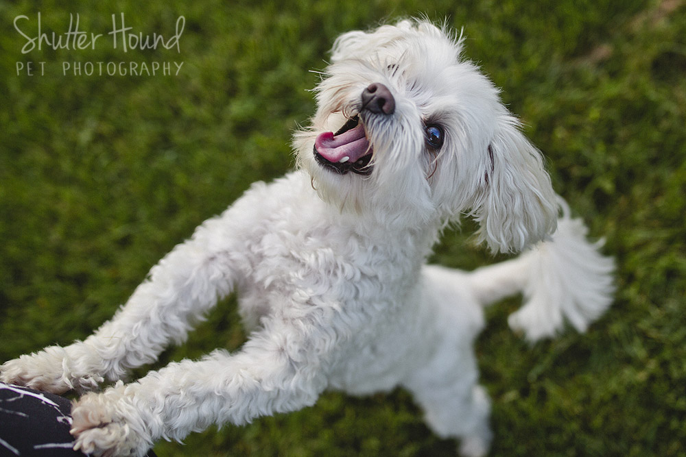 Wally | Mini Session | Shutter Hound Pet Photography | Central Illinois