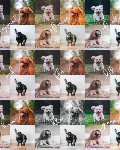 8 Lightroom Mobile Presets for Pets