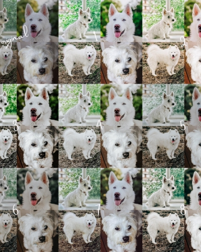 8 Lightroom Mobile Presets – White Pets