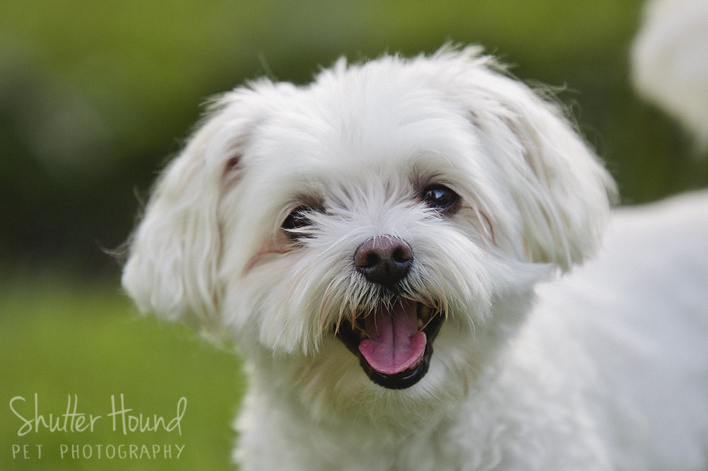 Shutter Hound Pet Photography | Central Illinois – Because