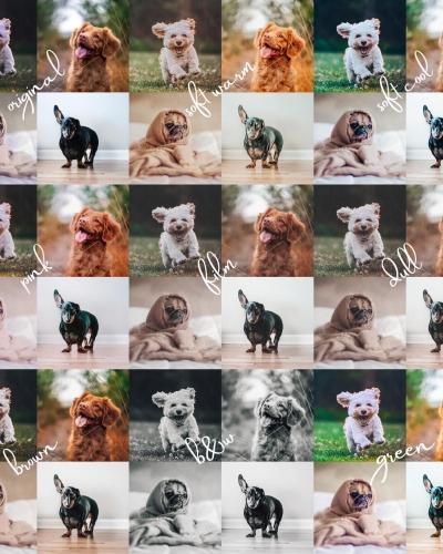8 Lightroom Mobile Presets for Pets