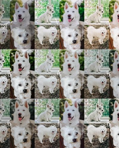8 Lightroom Mobile Presets – White Pets
