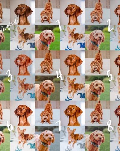 8 Lightroom Mobile Presets – Red Pets
